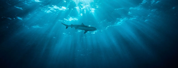 Shark Safety Can Guide You In The Office