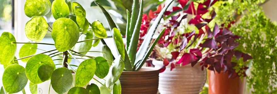 Seven benefits of having plants in your office on house plants in containers, tropical plants in vases, house plants in kitchen, green plants in vases, aquatic plants in vases, growing plants in vases, fake plants in vases, water plants in vases,