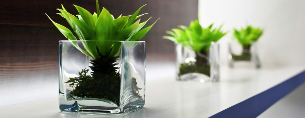 benefits-of-plants-in-the-office