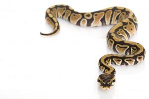 snake stance