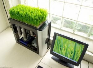 computer-growing-wheatgrass.jpg.650x0_q70_crop-smart