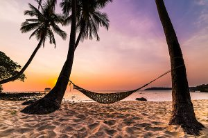 Tropical Paradise - Hammock between palm trees